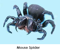 mousespider2